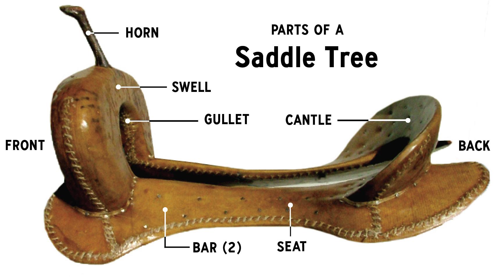 Saddle tree illust.png