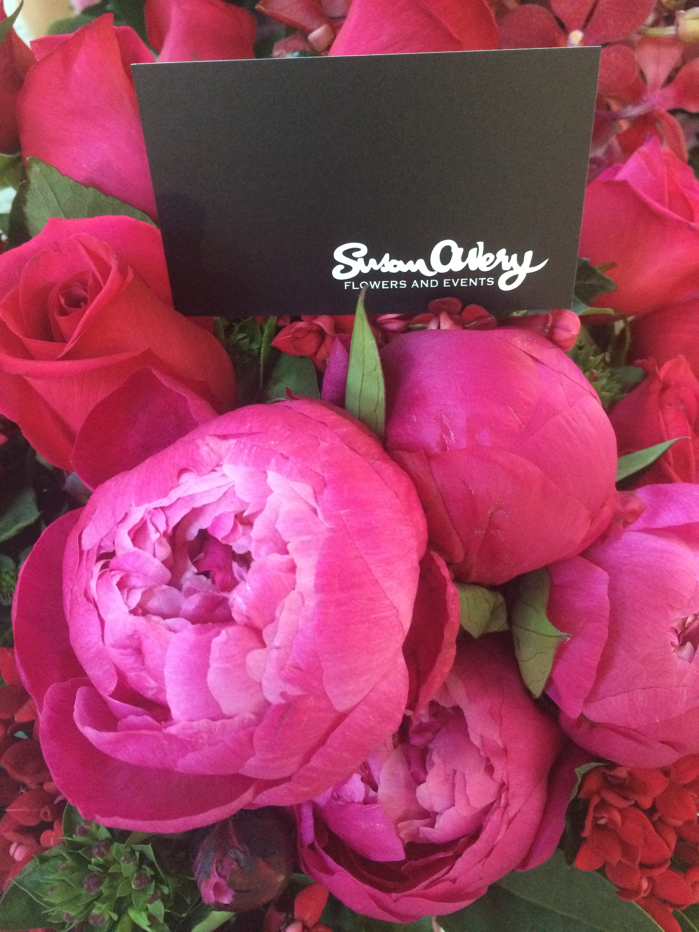 Pink Susan Avery Peonies Bursting With Colour