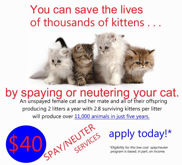 CATS1-web-ad.jpg
