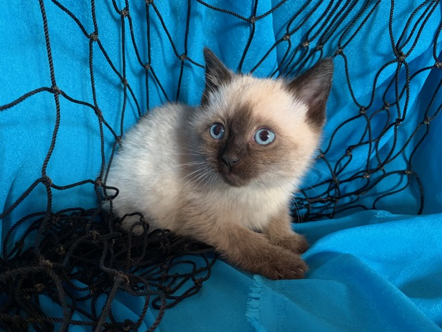 Nettie is a female kitten