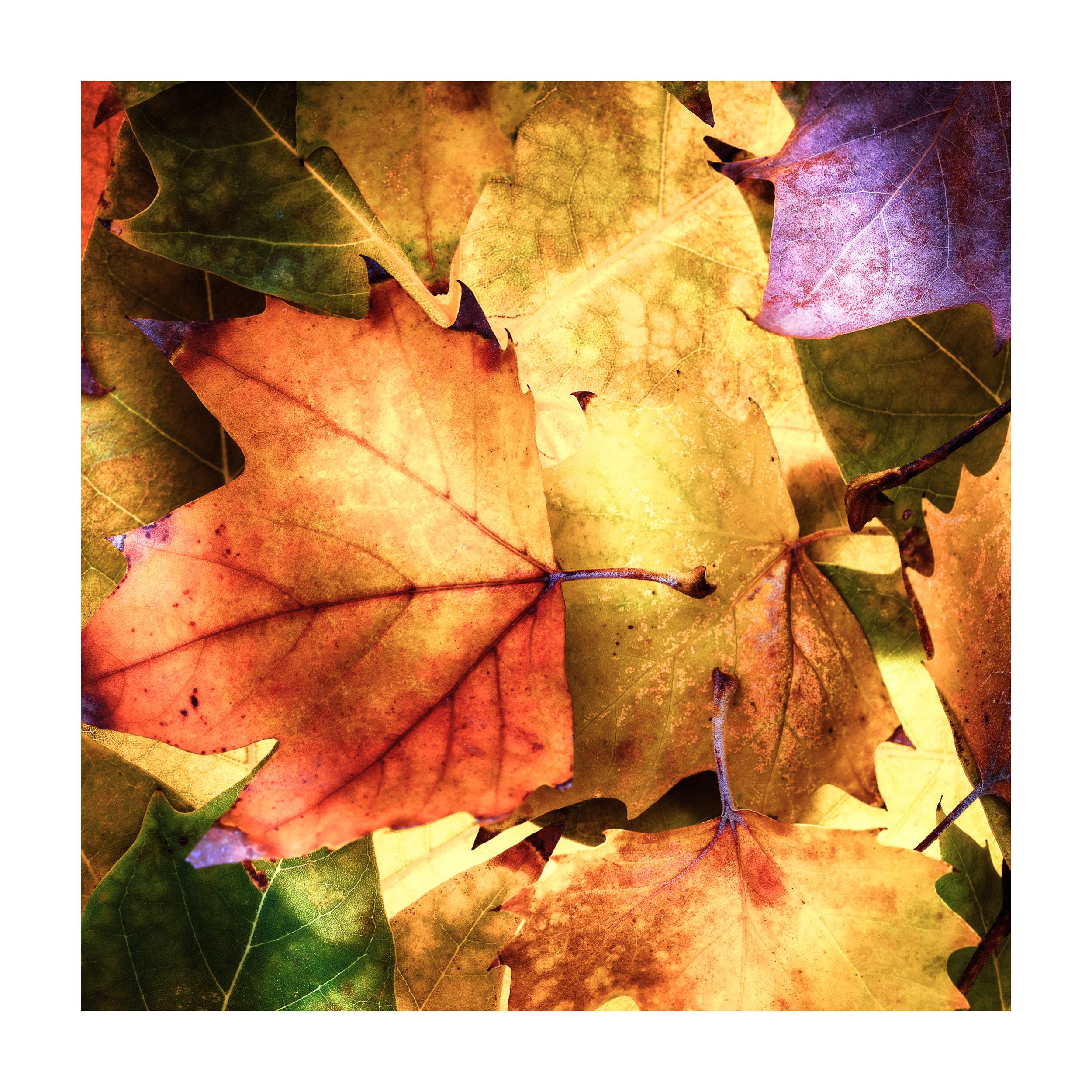 fragments of autumn # 2