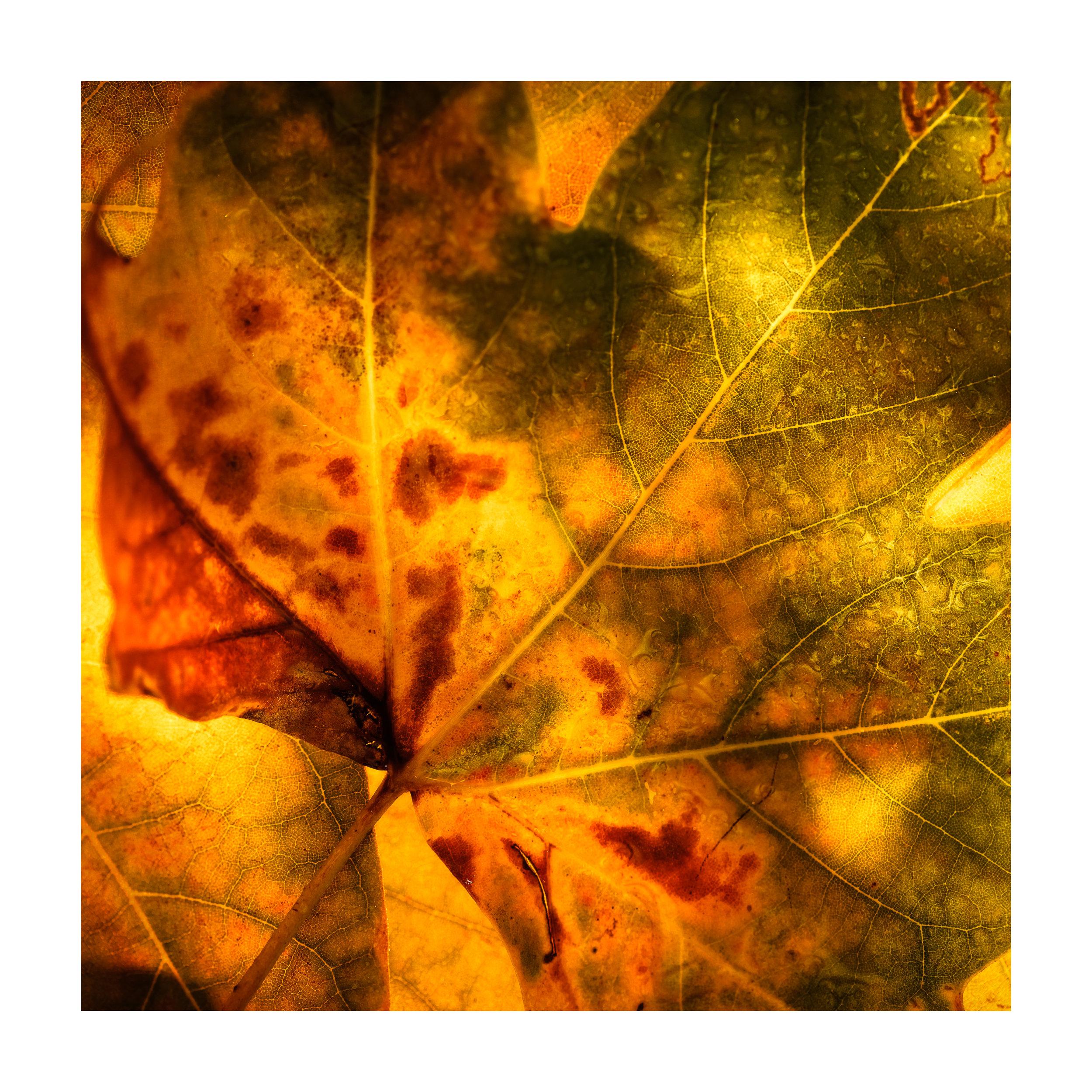 fragments of autumn # 1