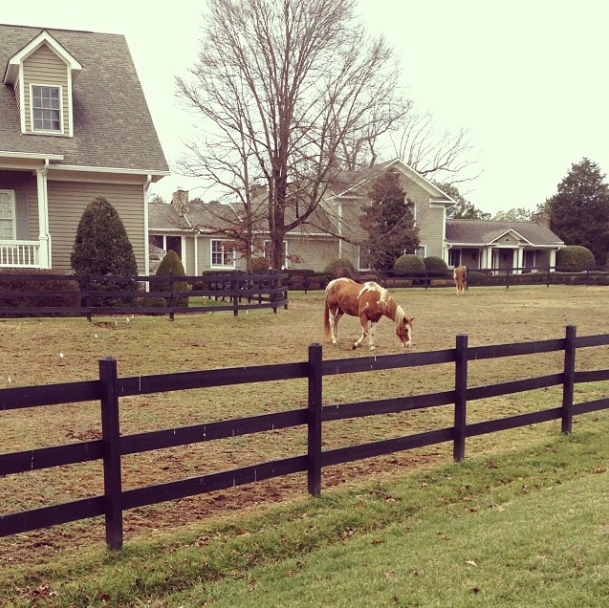laurenelizhook   Scenes like this make rainy day runs through the neighborhood much more bearable. #sweetspots