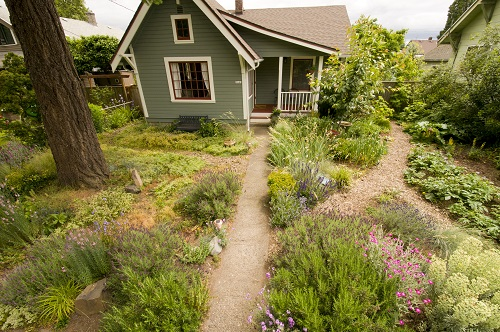 yard_garden_house_native_plants.jpg
