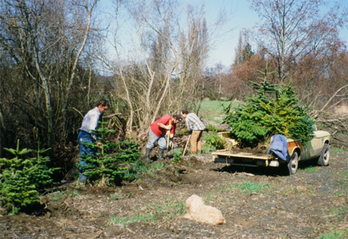 treeplanting_stream.png