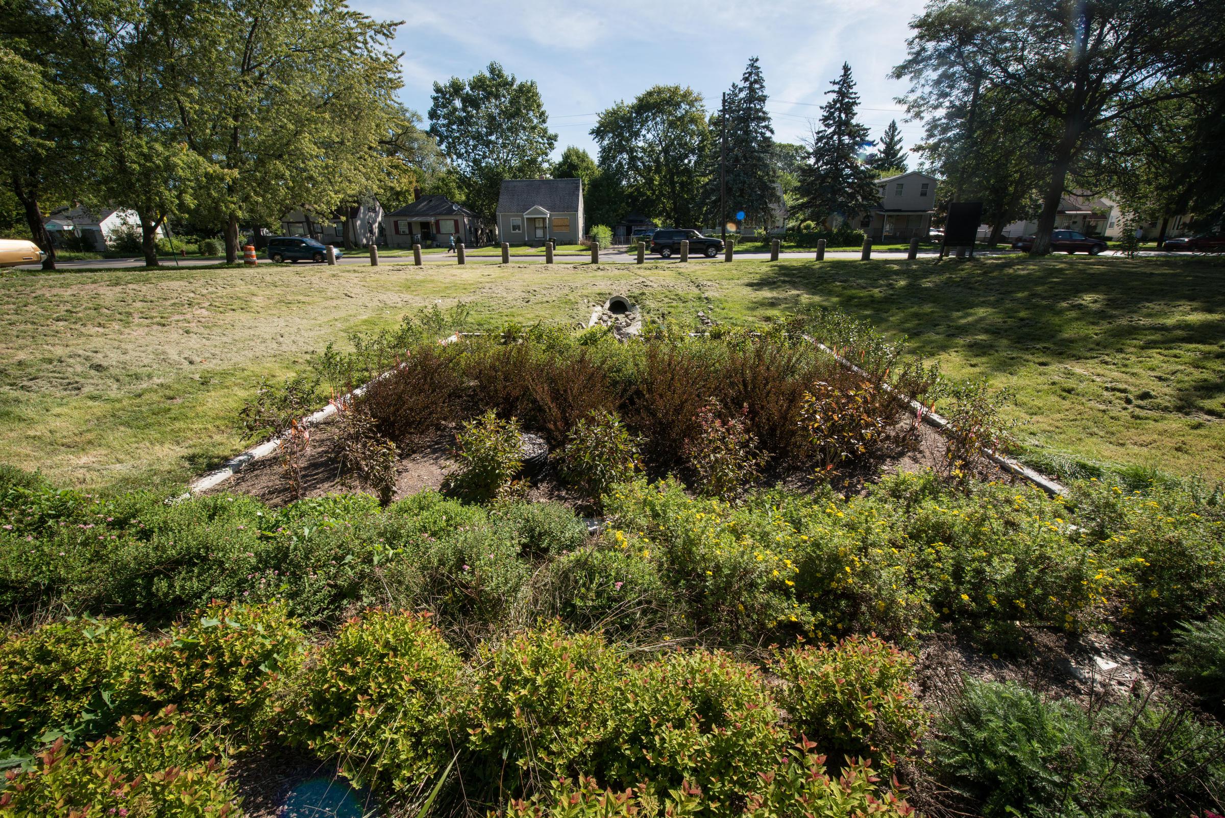 """Listen to Professor Nassauer talk about urban green infrastructure on Michigan Radio's """"The Next Idea""""   Photo by Dave Brenner"""