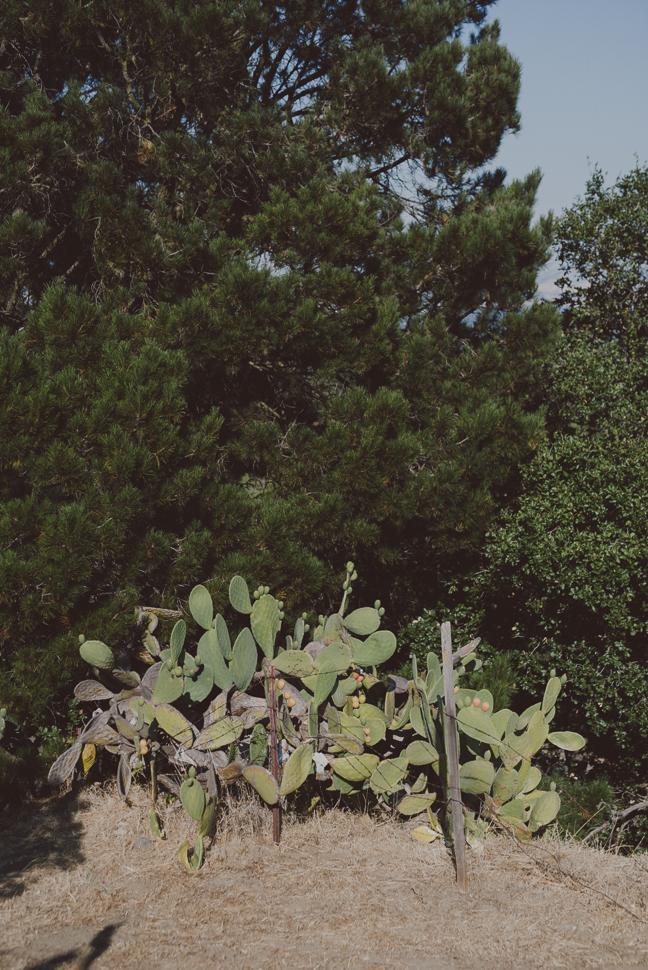 015_49_LOVE+WOLVES_Jenna+Bruno_SS_NOWM.jpg