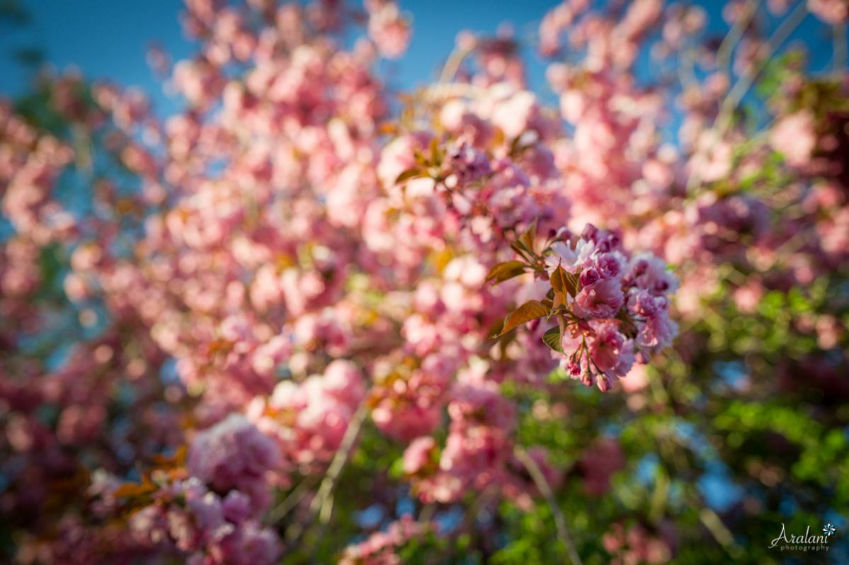 Spring_in_Portland002.jpg
