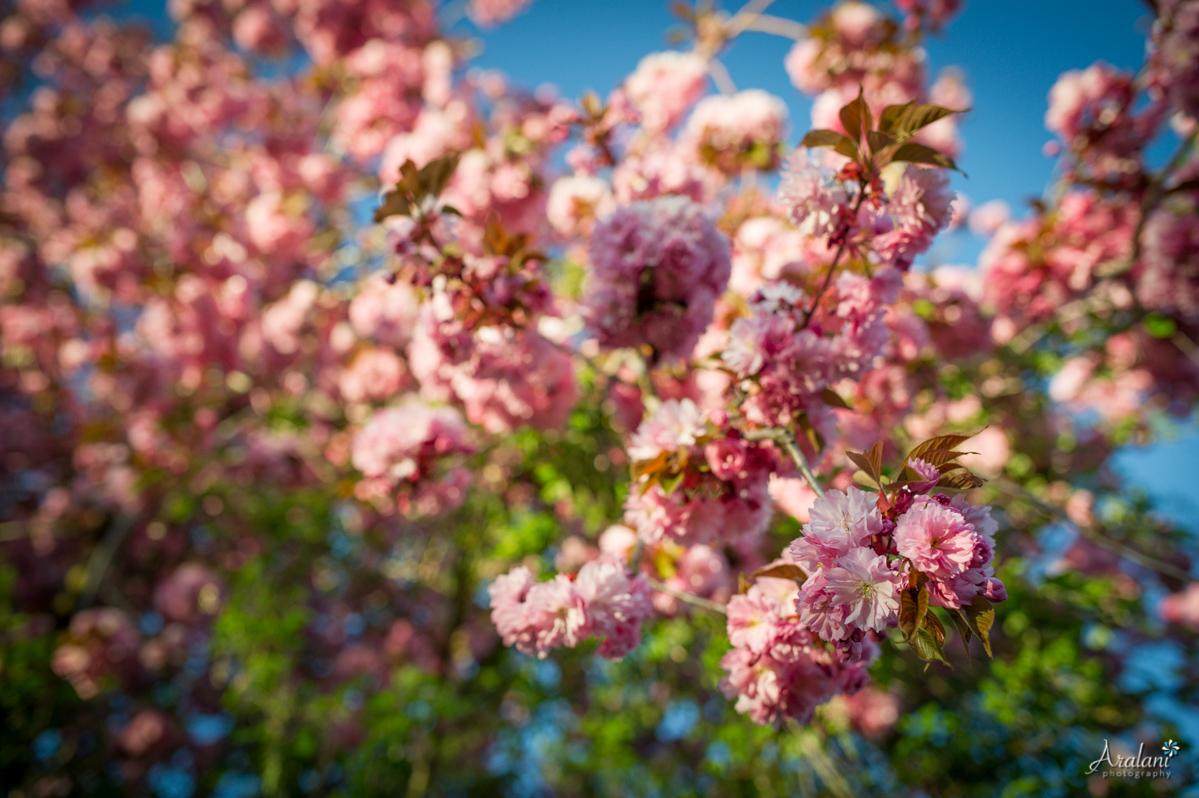 Spring_in_Portland003.jpg