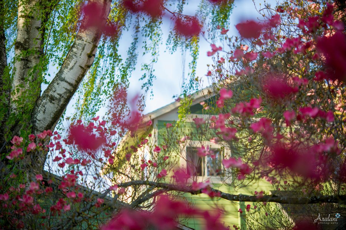 Spring_in_Portland007.jpg