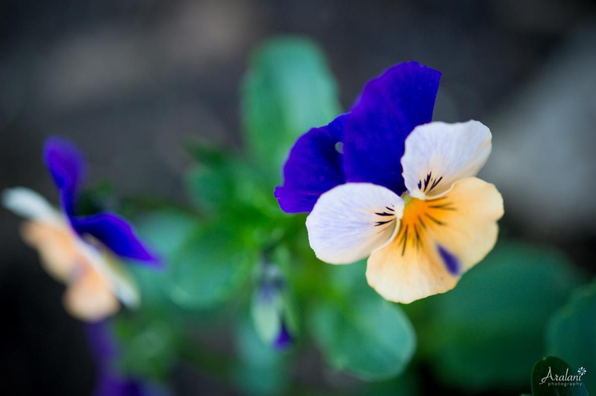 Spring_in_Portland016.jpg