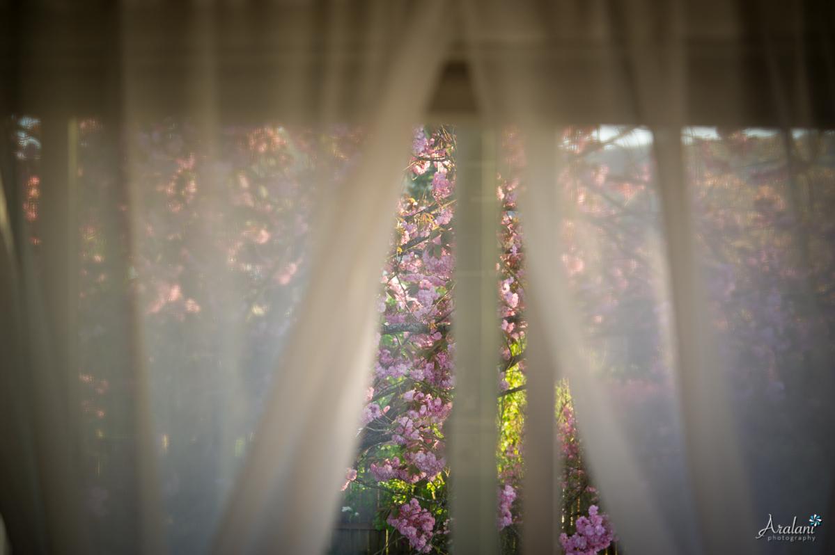 Spring_in_Portland020.jpg