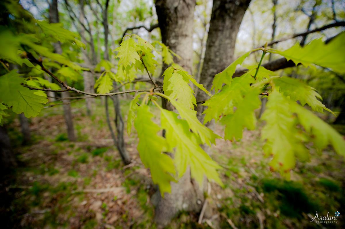I love the trees in Acadia!