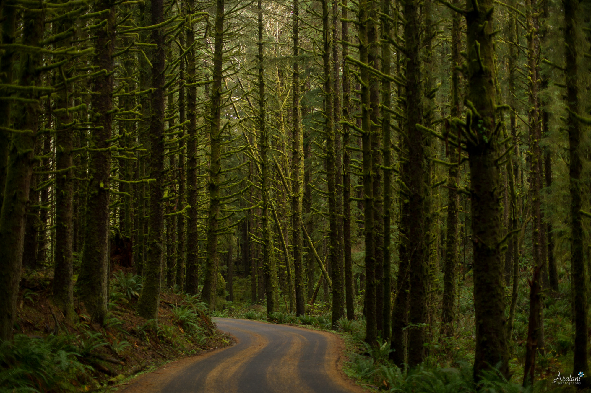 Ecola State Park - Oregon