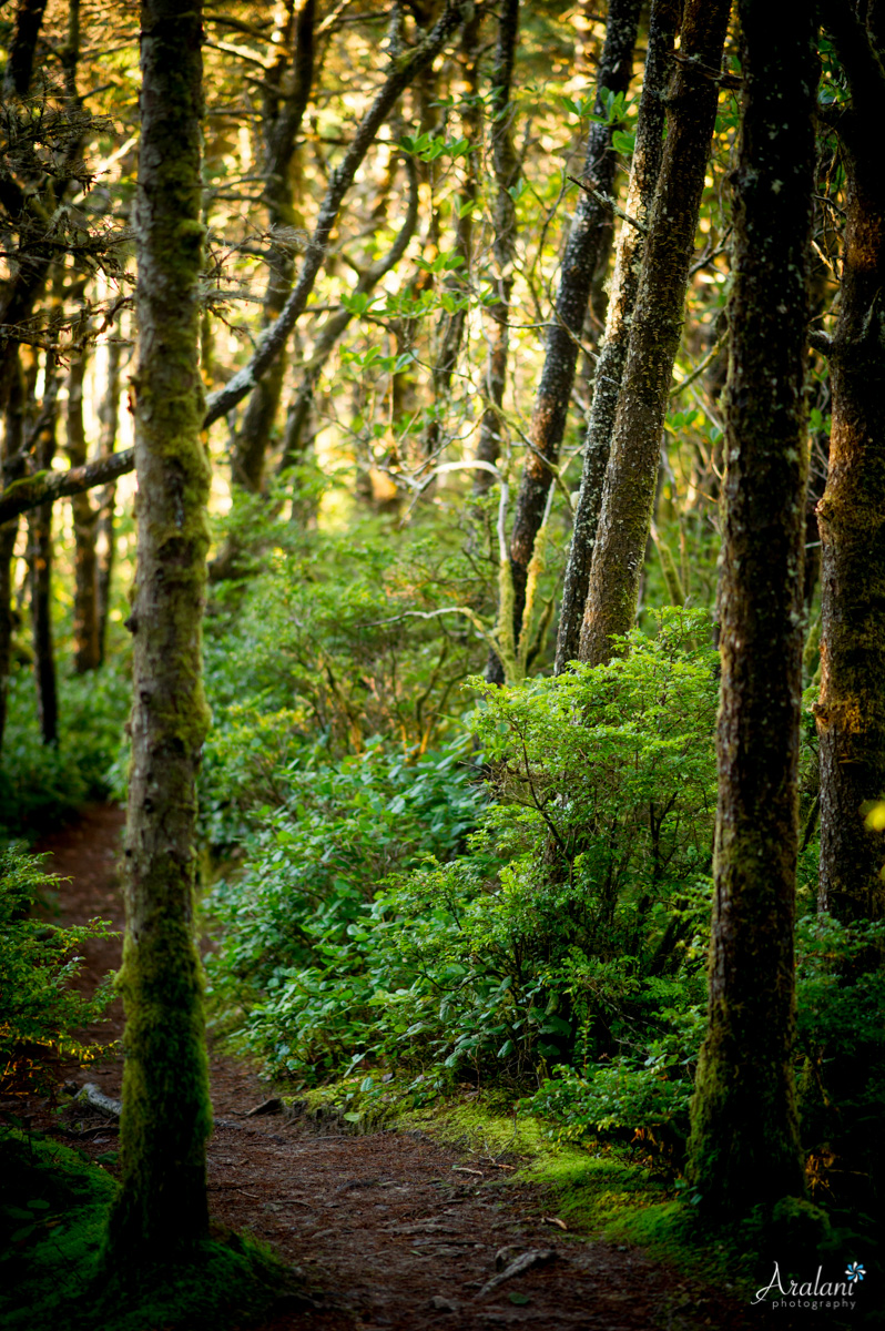 The Trail to Hobbit Beach - Cape Perpetua, Oregon