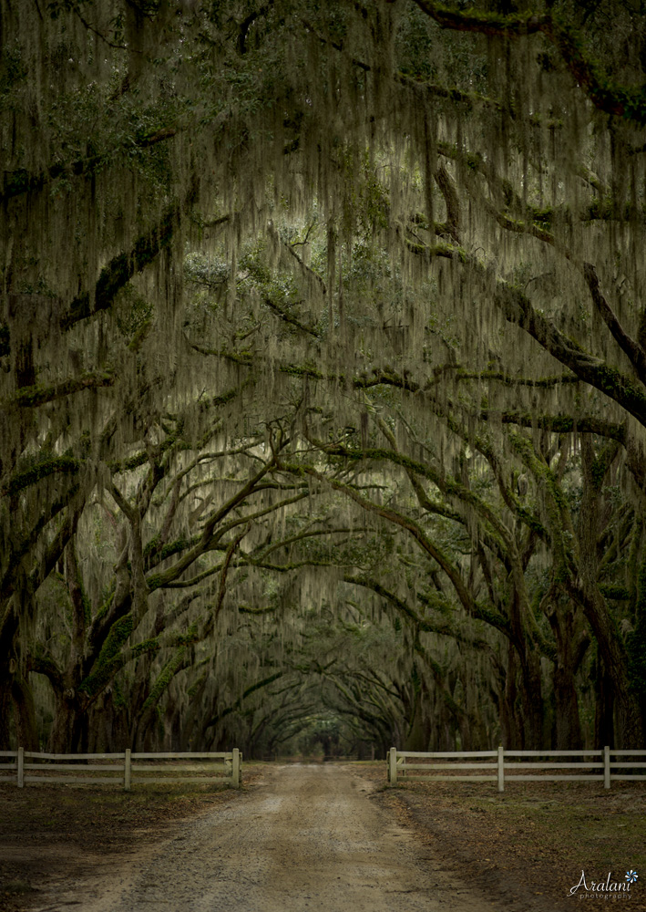 Wormsloe - Savannah, Georgia