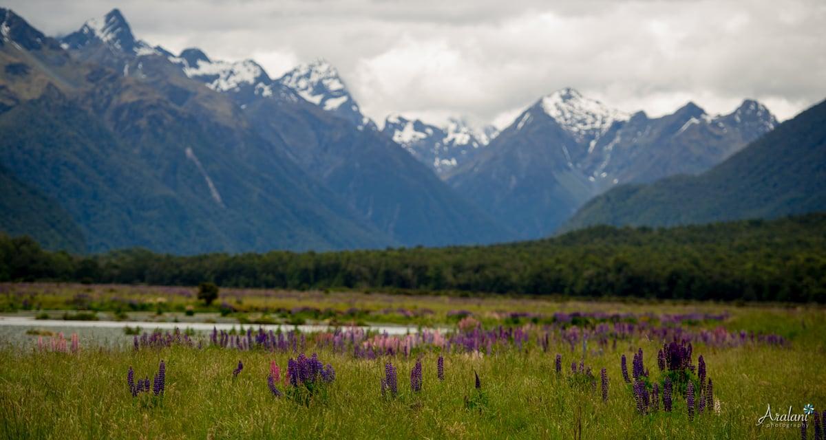 New_Zealand_Roadtrip_0030.jpg