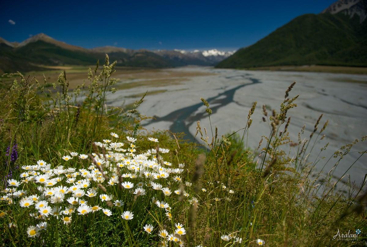 New_Zealand_Roadtrip_0075.jpg