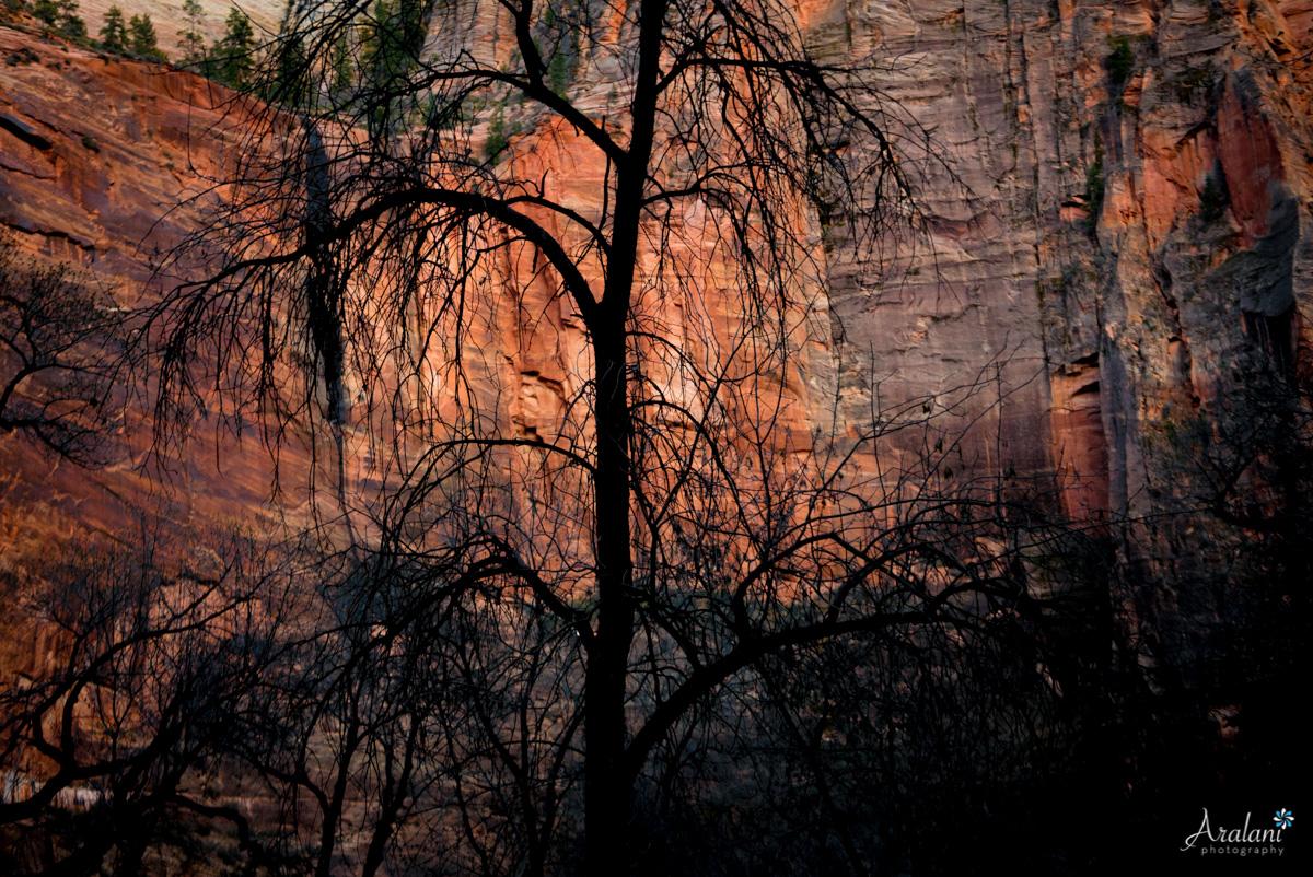 Zion_Canyoneering_Adventure007.jpg