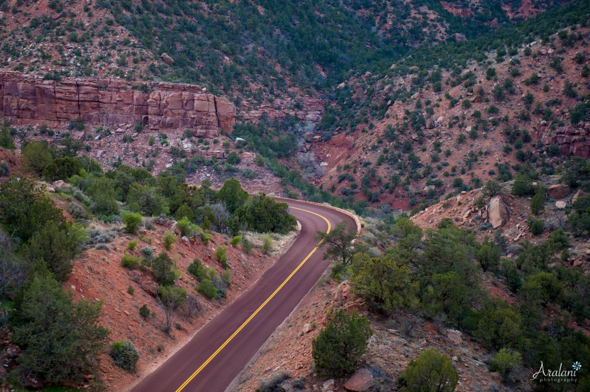 Zion_Canyoneering_Adventure033.jpg