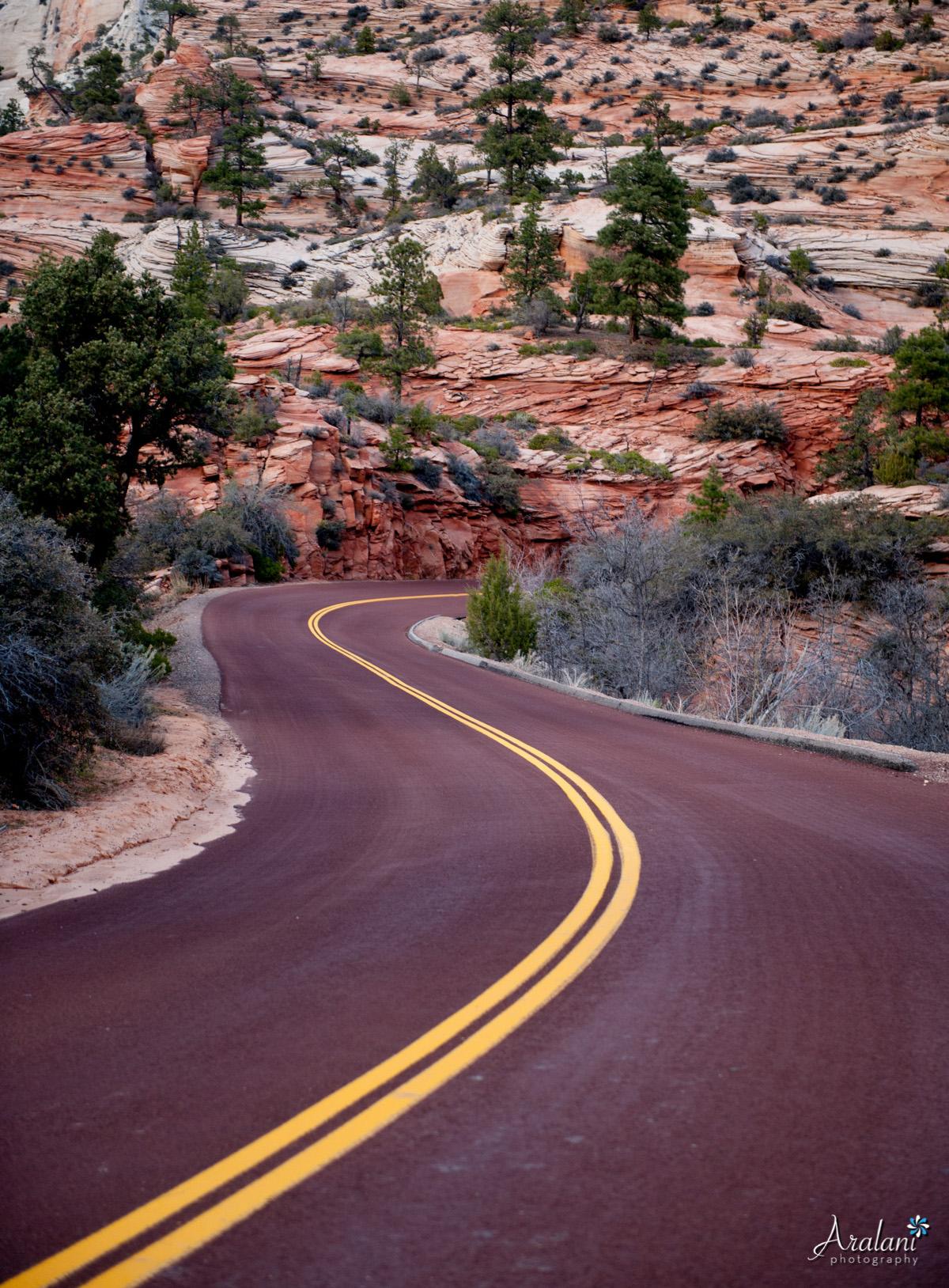 Zion_Canyoneering_Adventure036.jpg