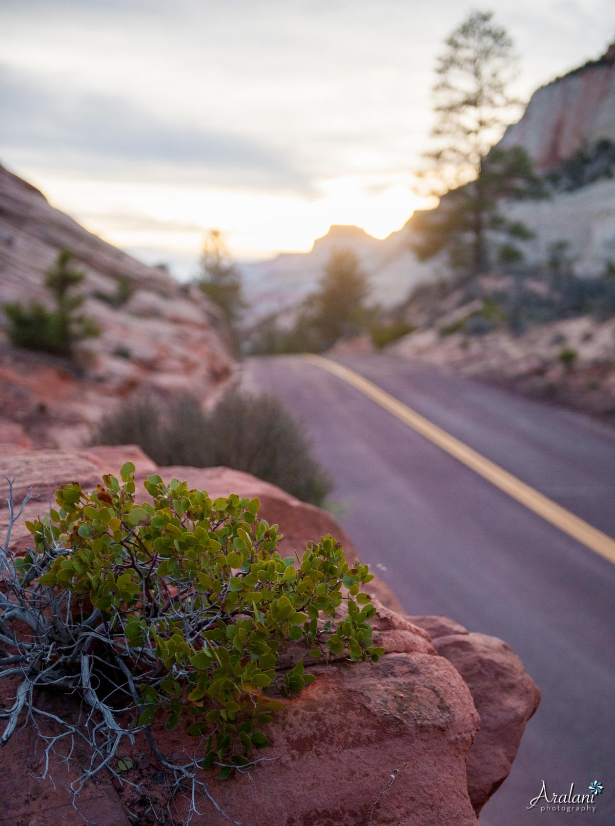 Zion_Canyoneering_Adventure041.jpg