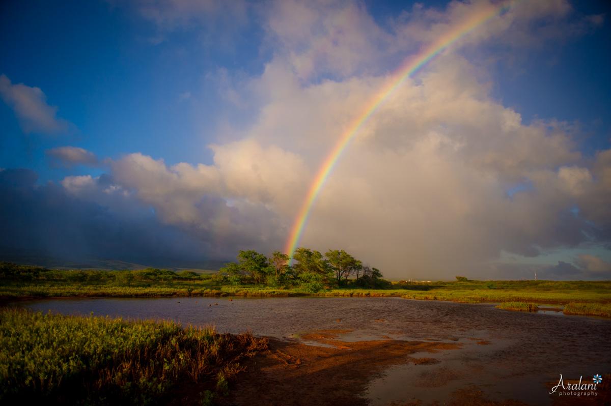 Kauai_Trip_Report0006.jpg
