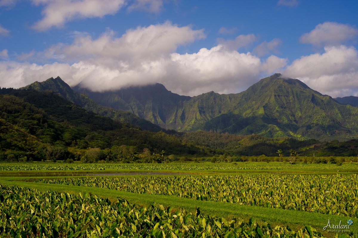 Kauai_Trip_Report0058.jpg