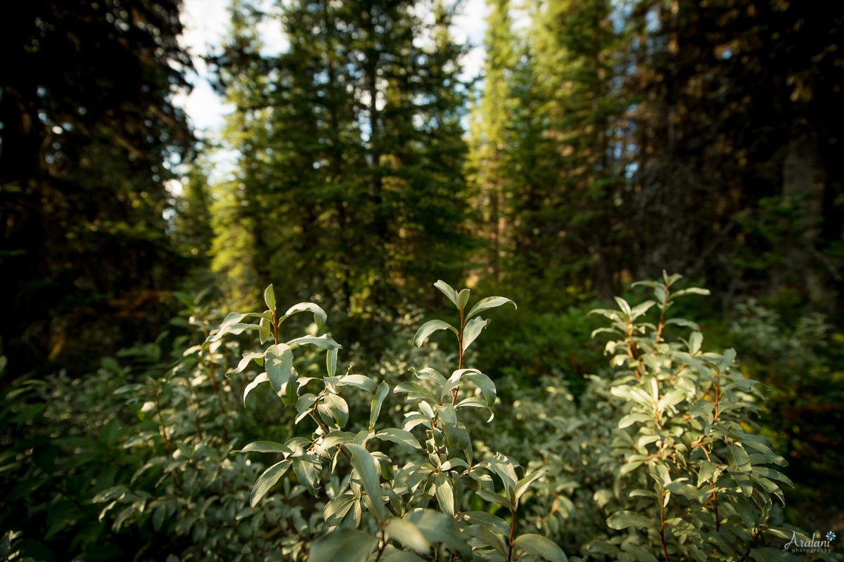 Banff_Roadtrip_029.jpg