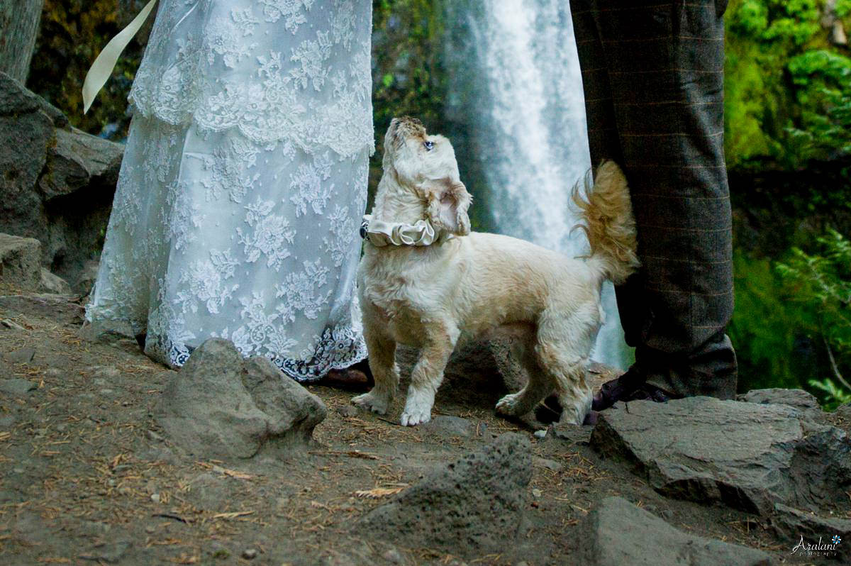 Falls_Creek_Falls_Wedding0012.jpg