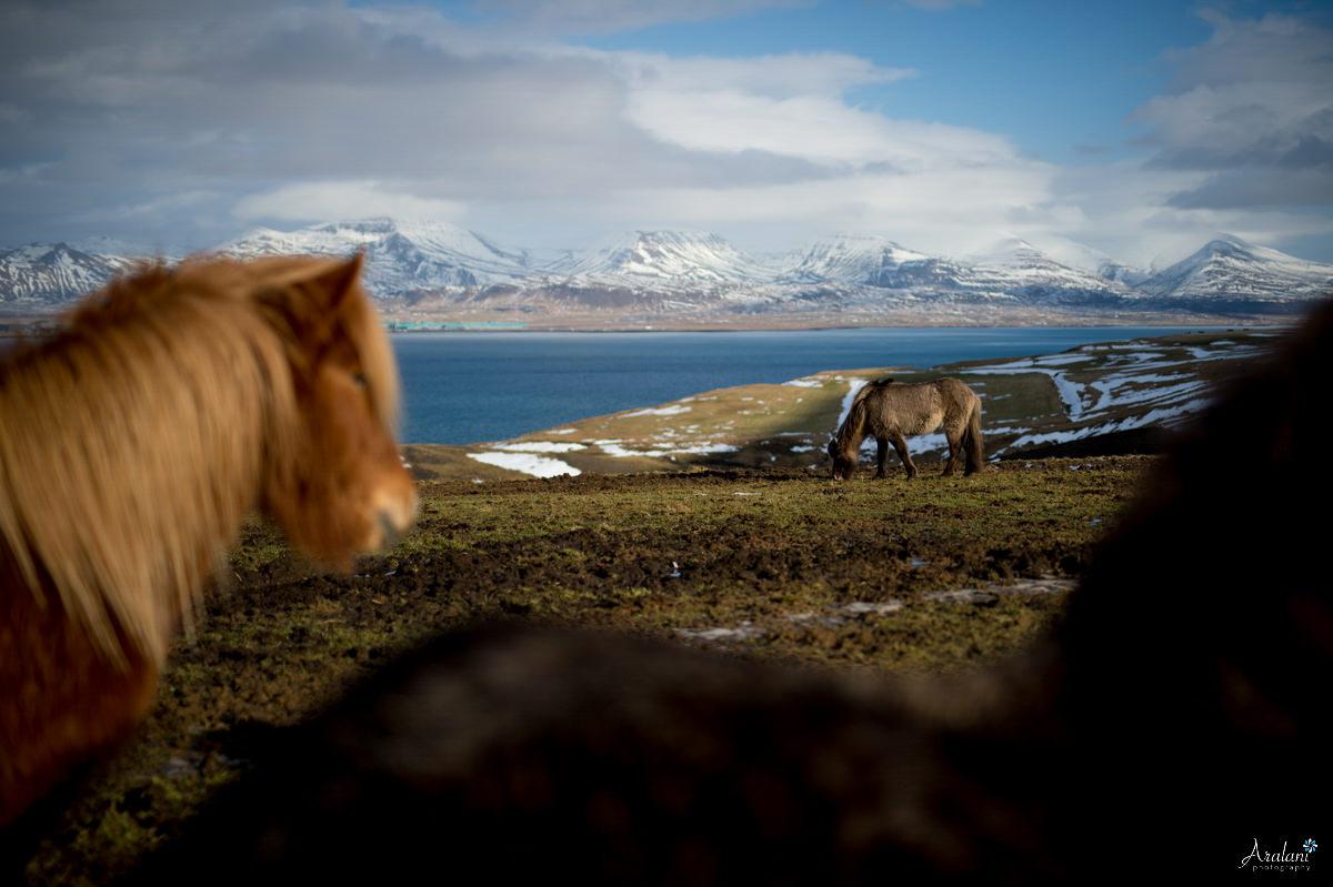 Iceland_Aralani0009.jpg