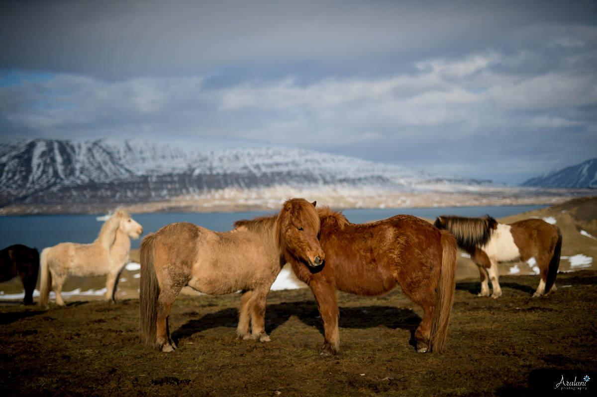 Iceland_Aralani0011.jpg