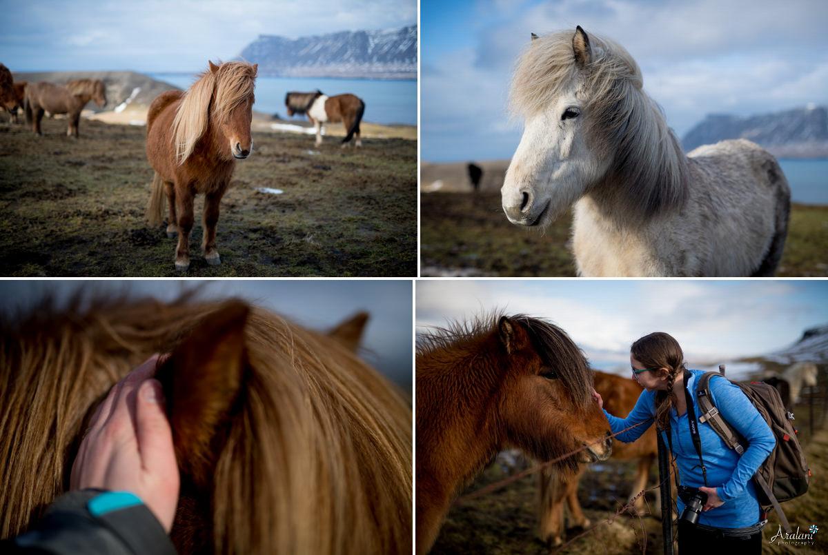 Iceland_Aralani0010.jpg