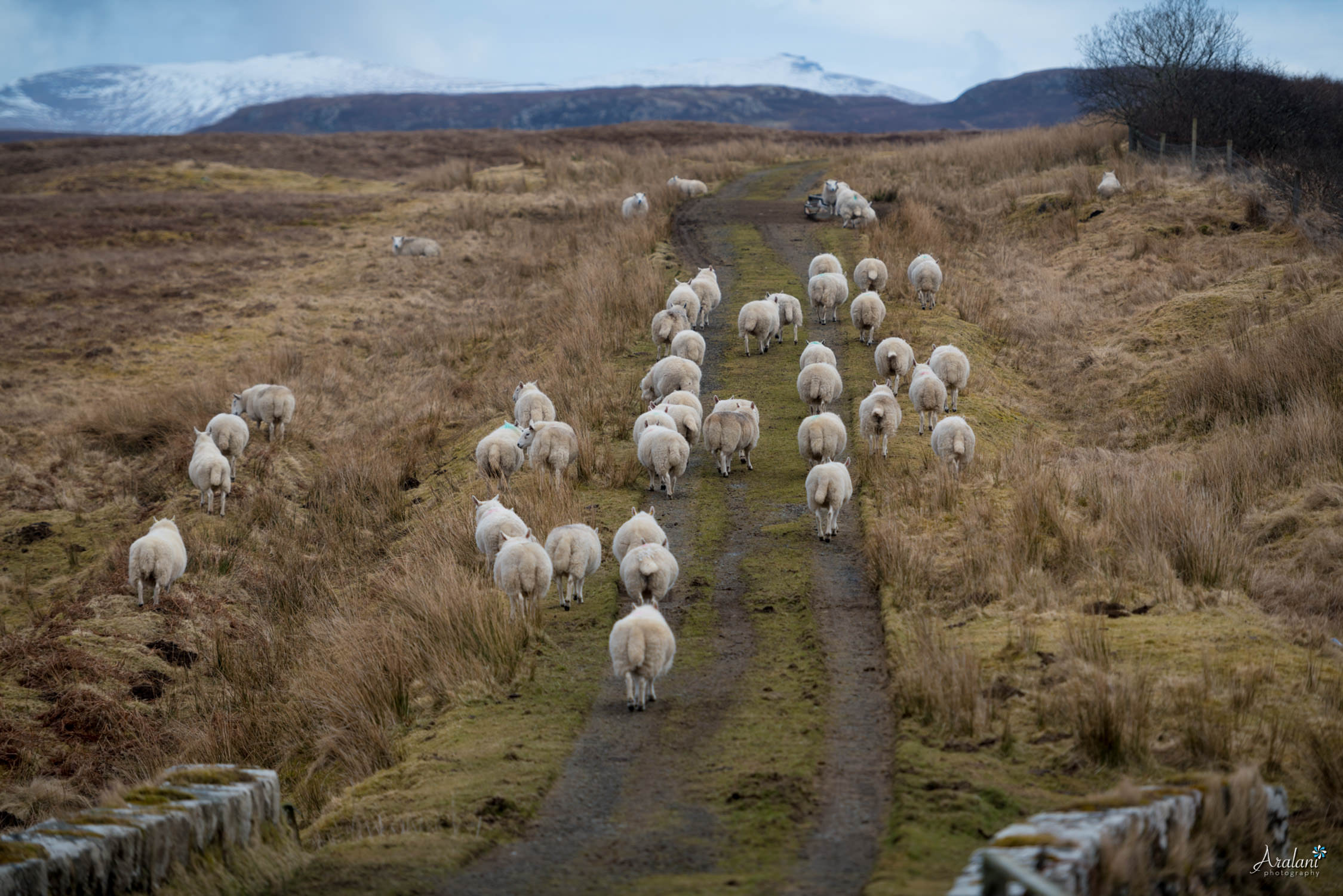 Aralani_Scotland_0019.jpg