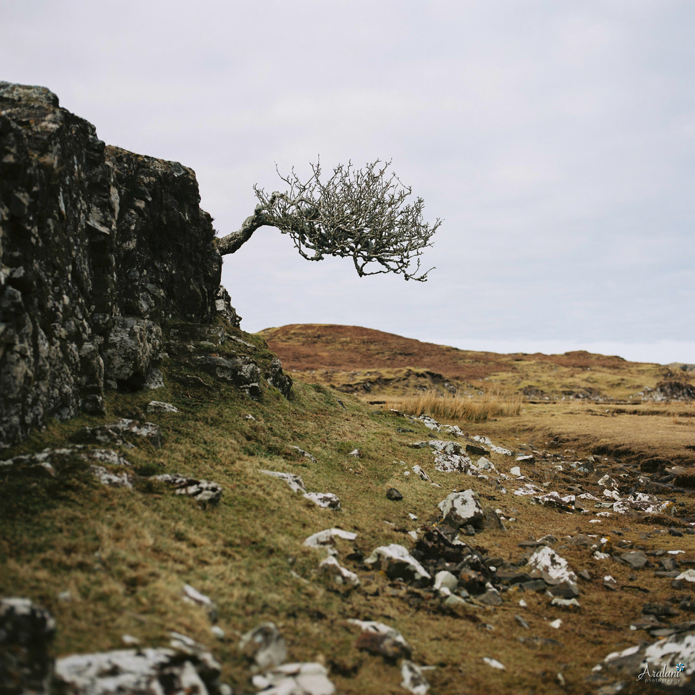 Aralani_Scotland_0021.jpg