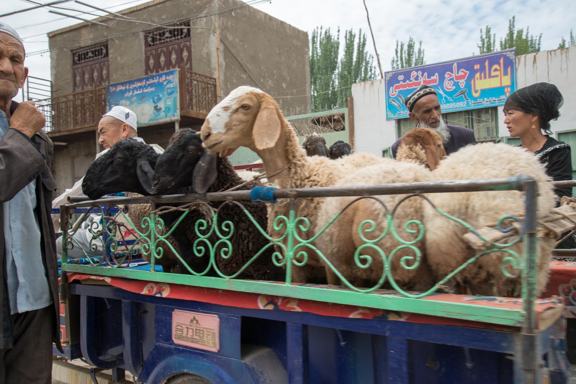 Live Animal Market