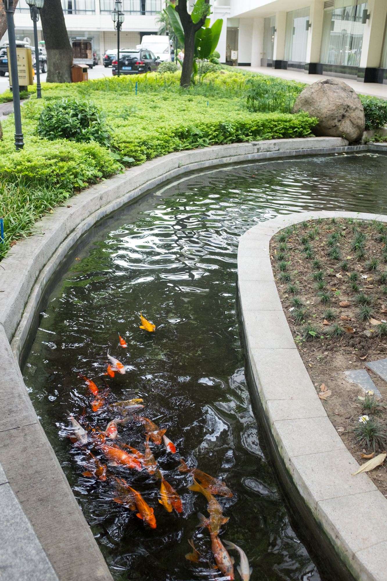 Carp in ceremonial canal