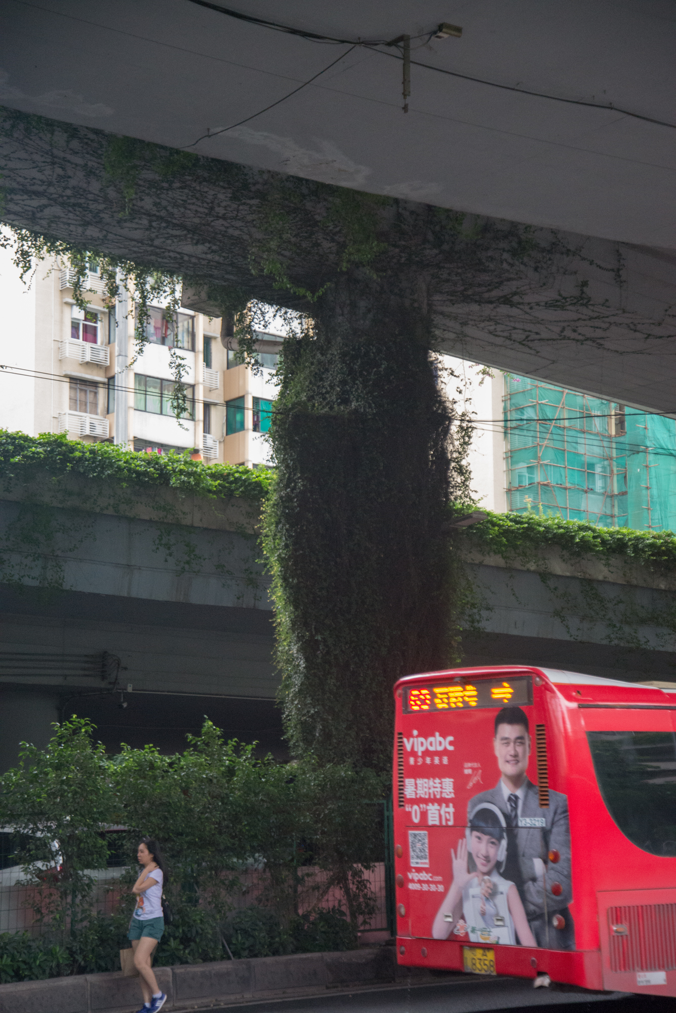 Vine and Overpass