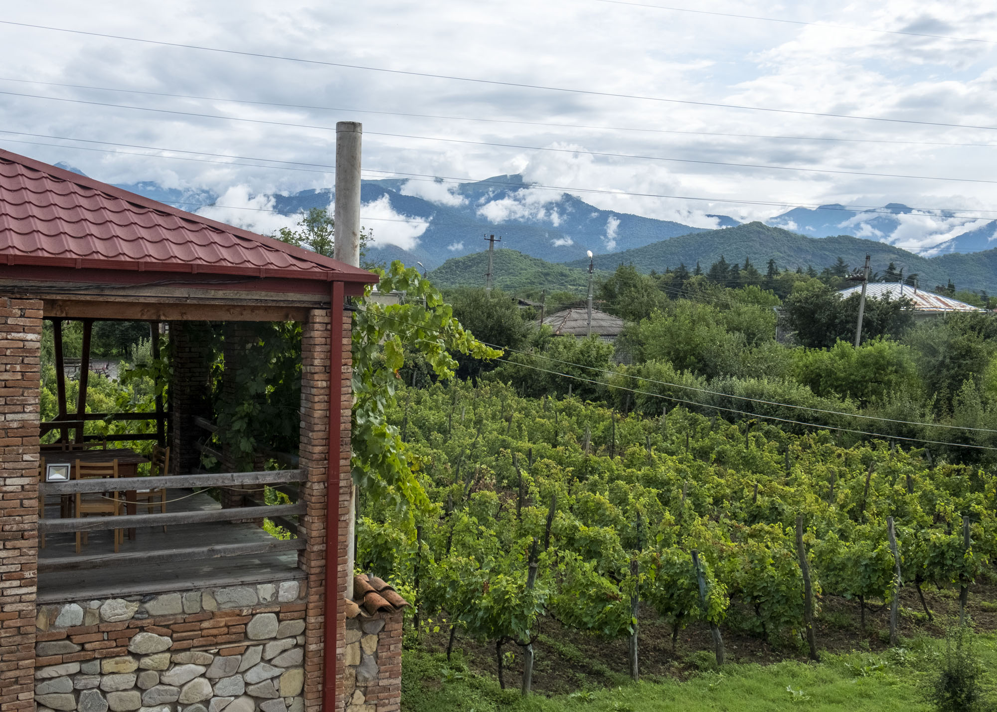 vineyard and mountains.jpg