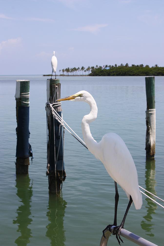 Islamorada, Florida, 2012