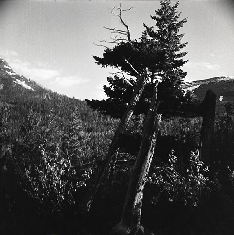 trees003.jpg