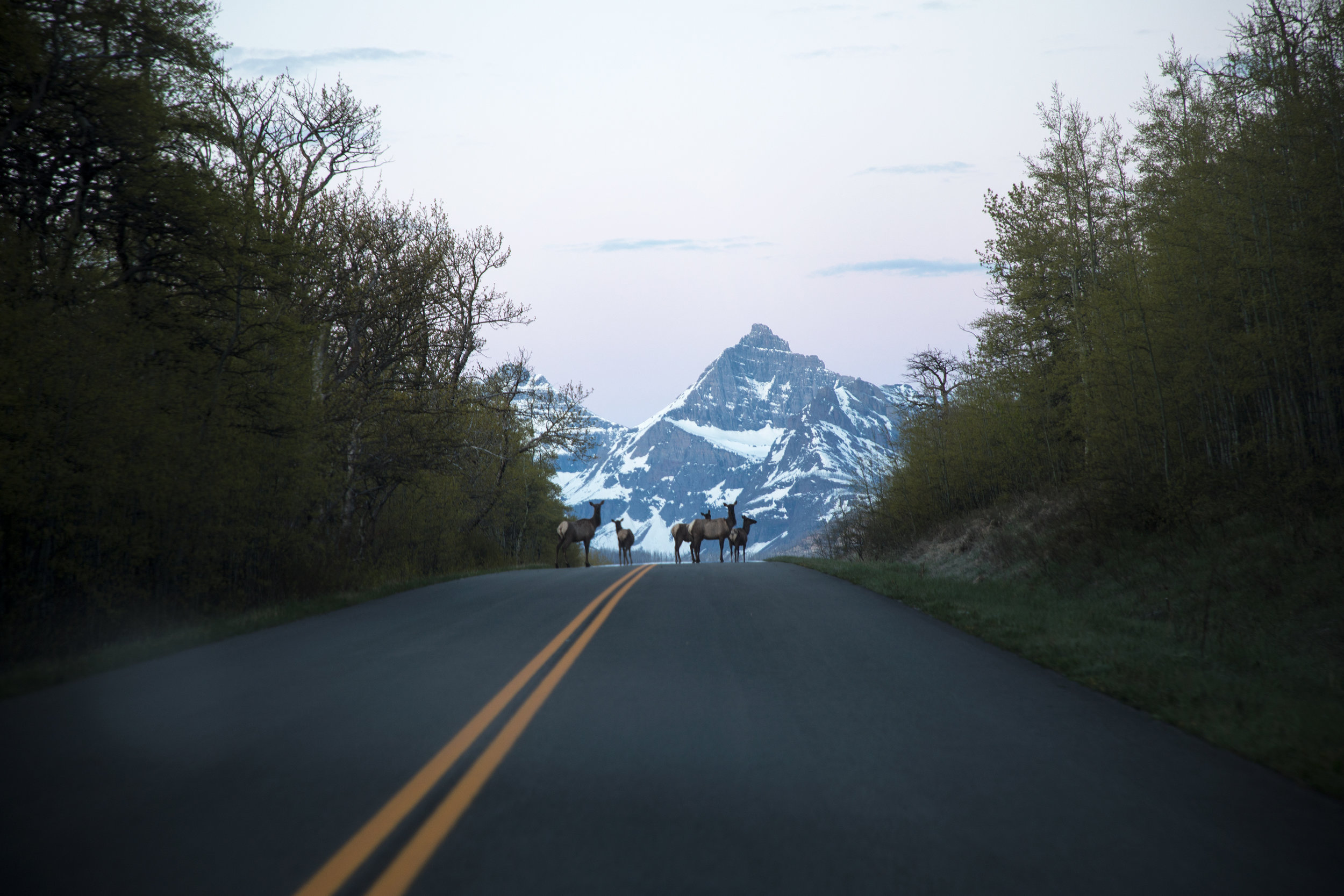RoadBlock_web_large.jpg