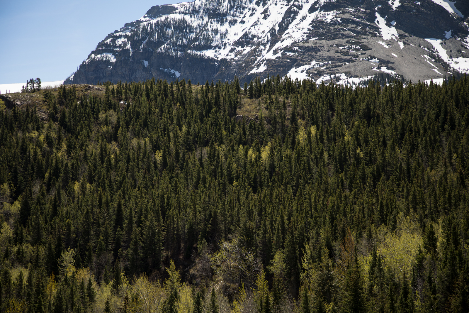 Trees-Mountain_web.jpg