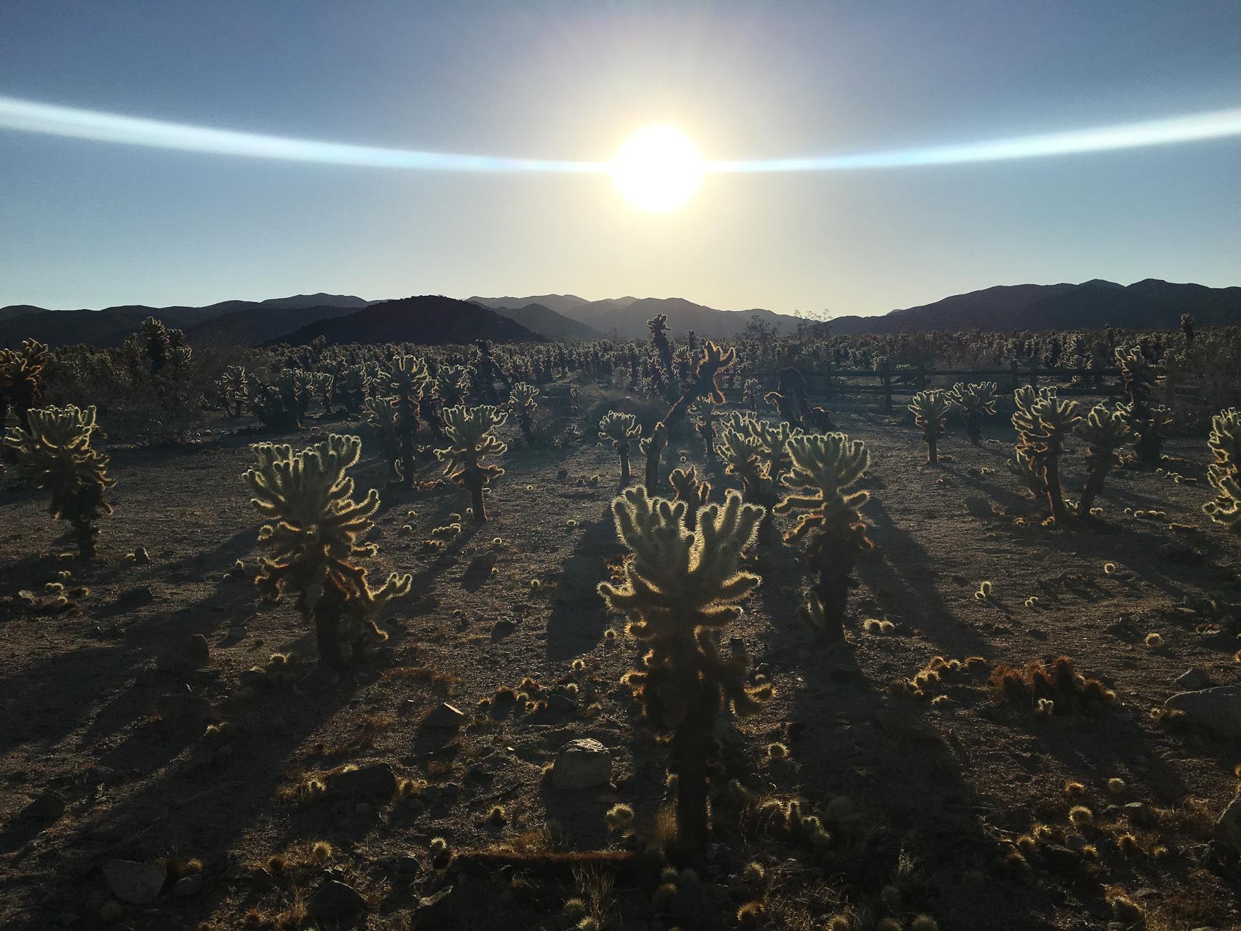 Divine_Cacti.jpg