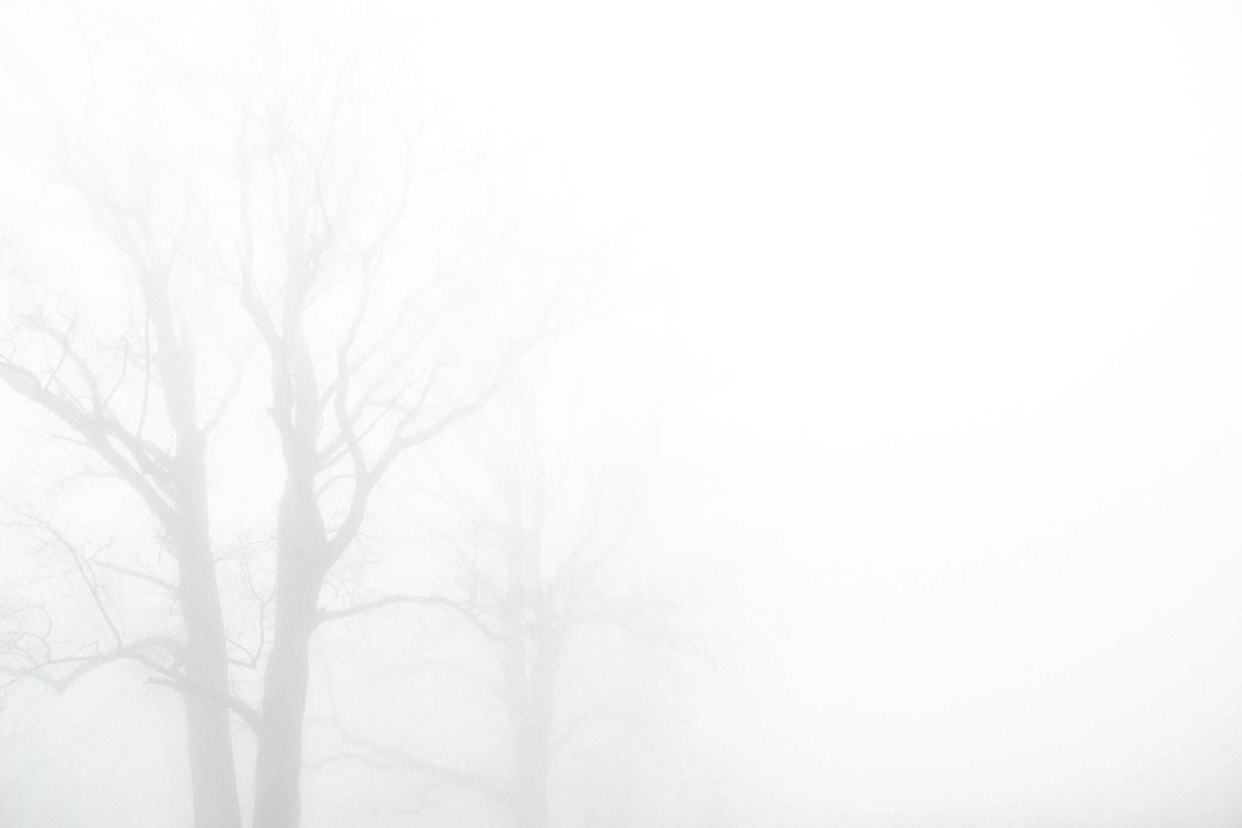 ghosttree1.jpg