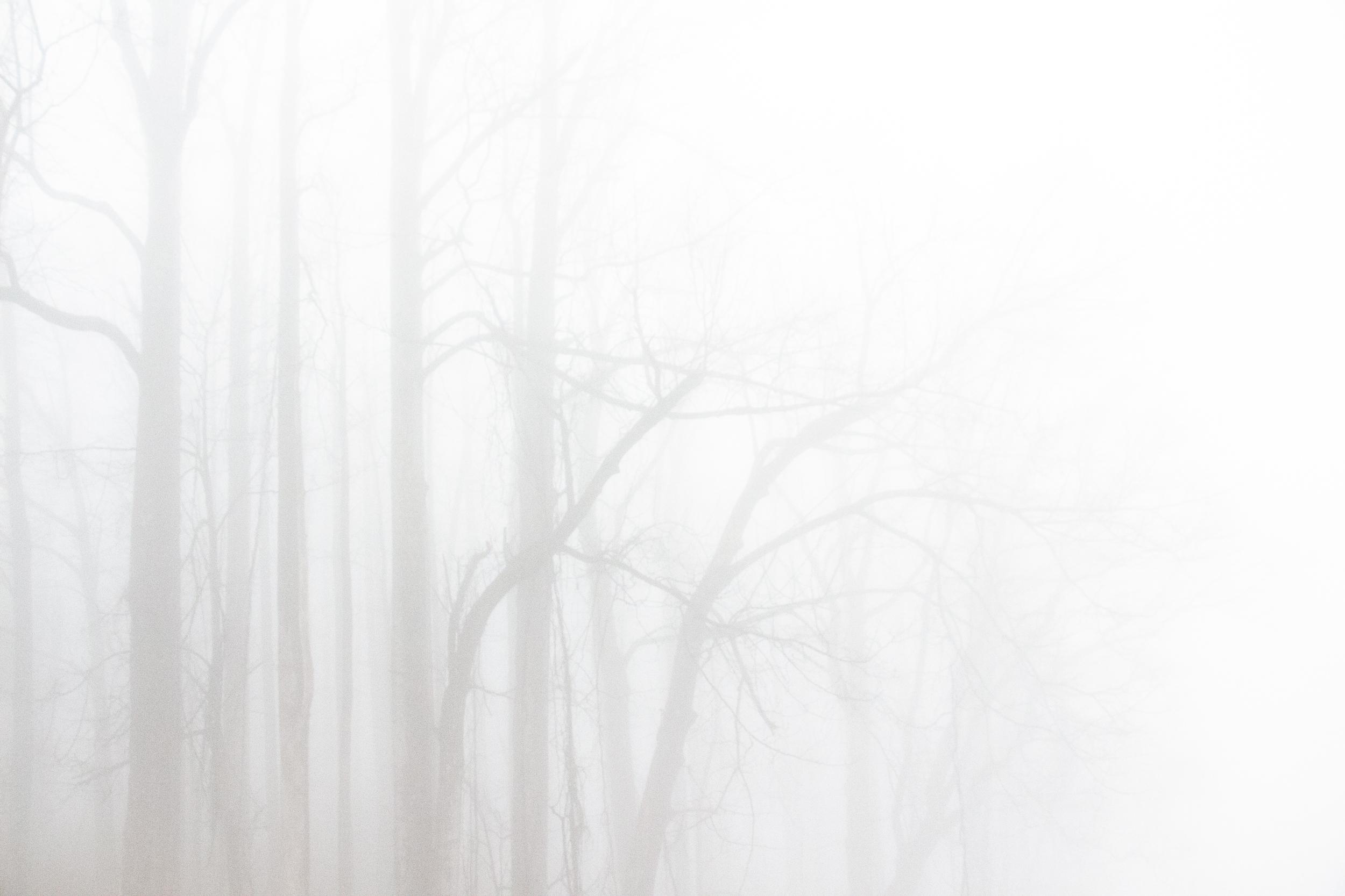 ghosttrees2.jpg