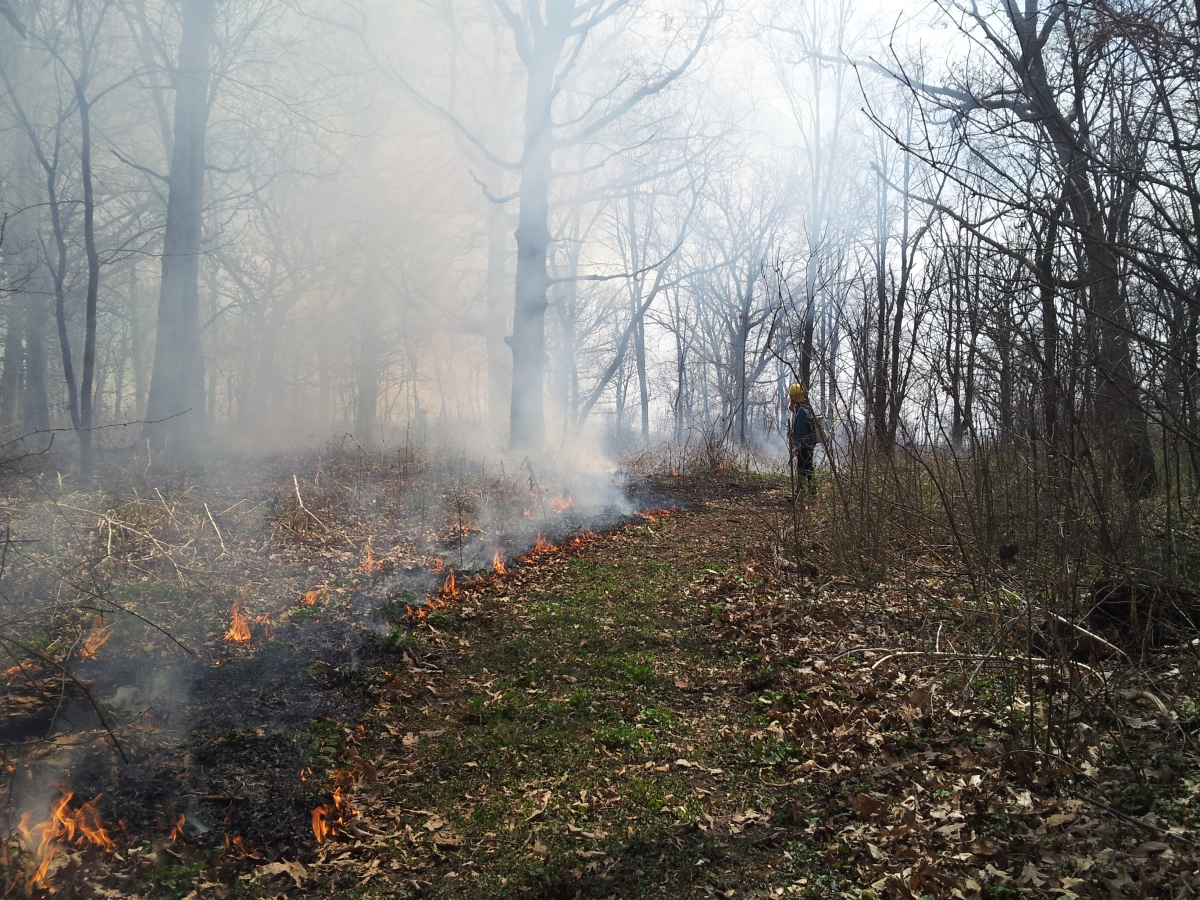Prescribed fire in a woodland is characterized by low flames and leaves a patchy mosaic of burned areas.