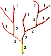 an illustration of the Strahler numbering system