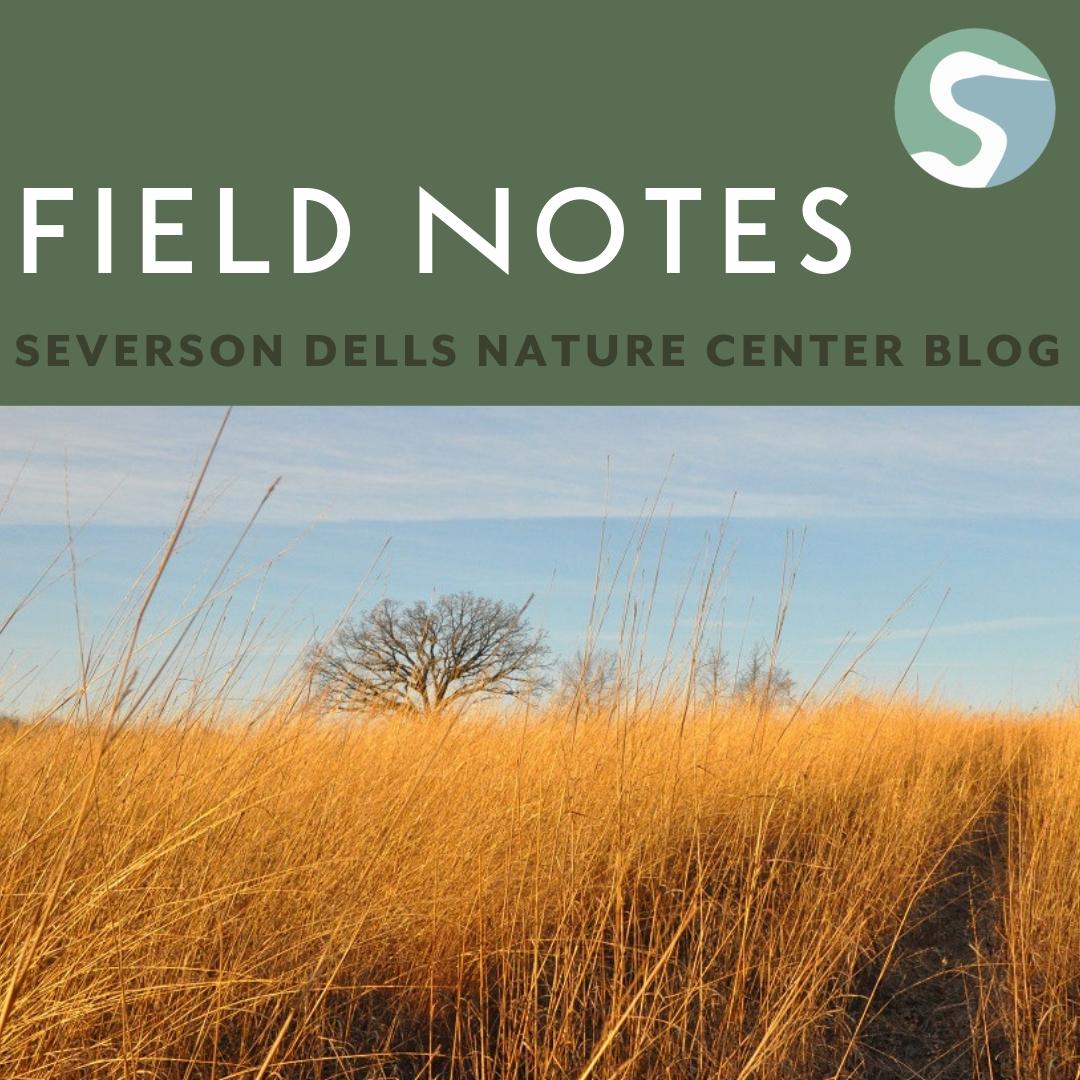 Media — Severson Dells Nature Center