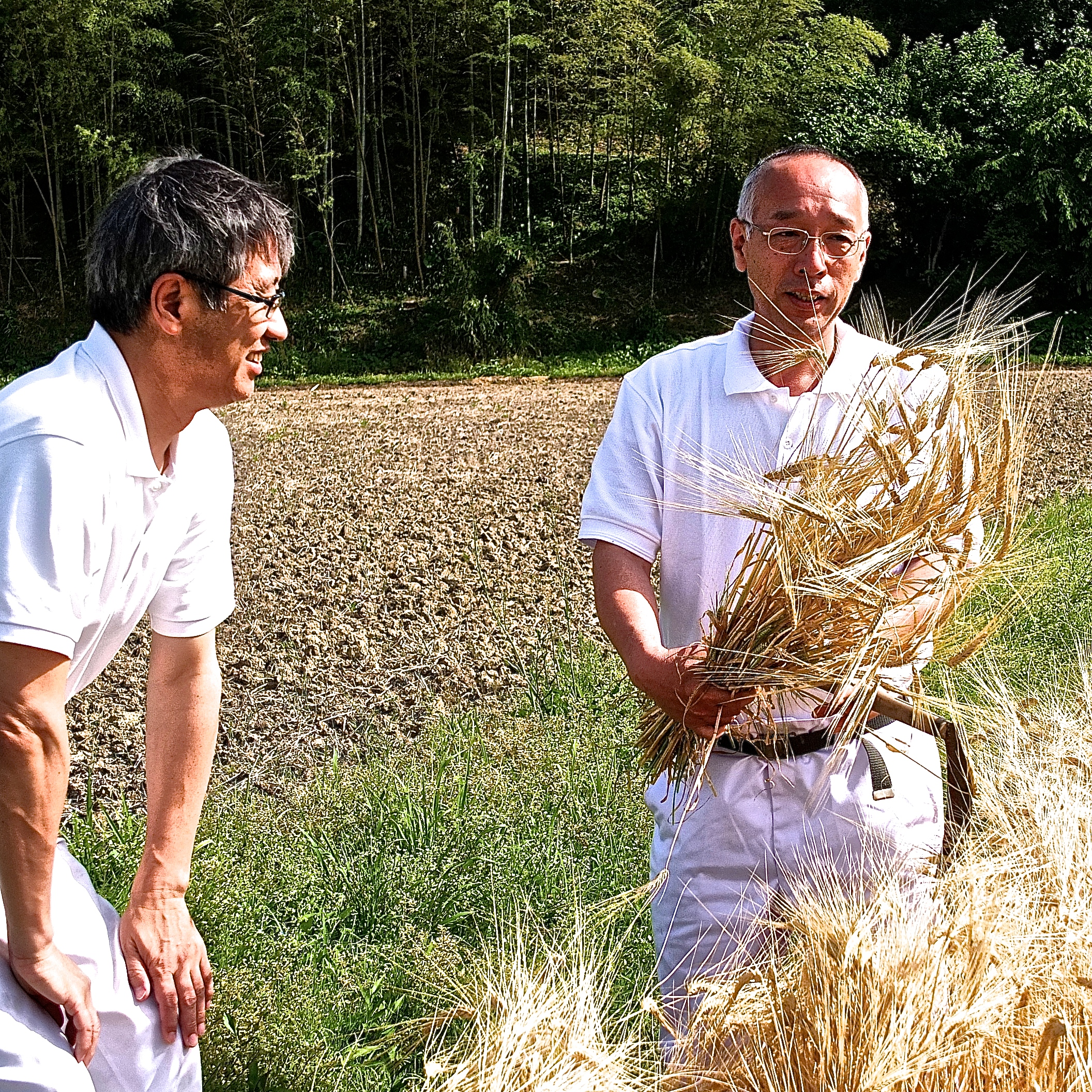 Master distillers Wada (left) and Okoba (right) viewing the harvest.
